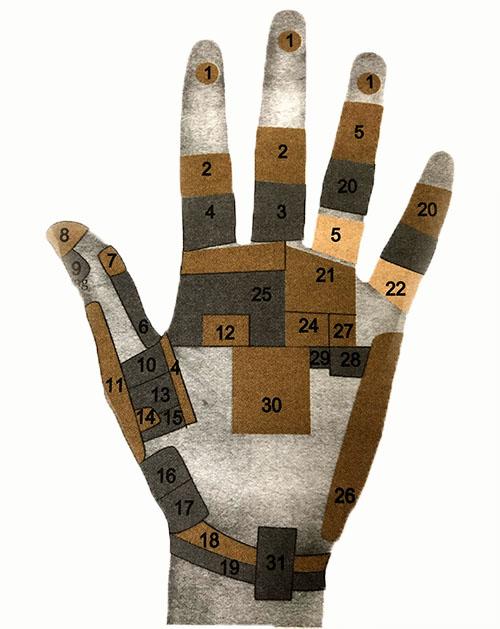 xem tay dự đoán tình trạng sức khỏe