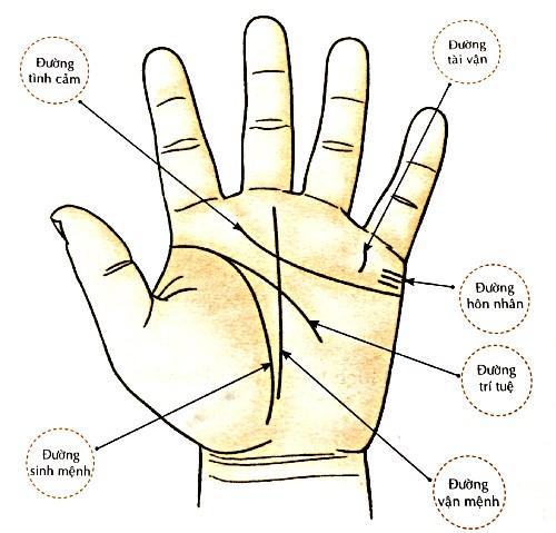 ý nghĩa đường vân trên lòng bàn tay